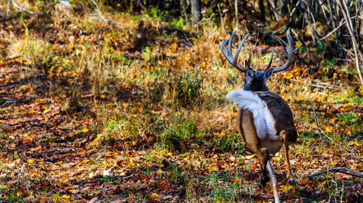 6 Ways You Spook Deer Without Knowing It Preview Image