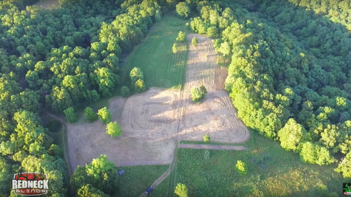 Huntin Grounds: What to Plant for Deer in Summer Food Plots Preview Image