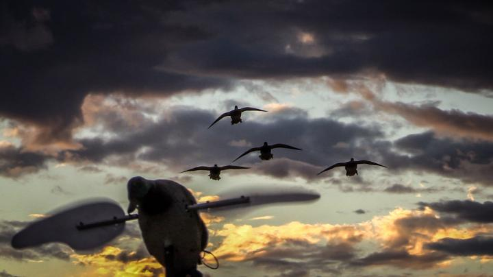 The X: Five-Man, 40-Duck Limit in 25 Minutes Preview Image