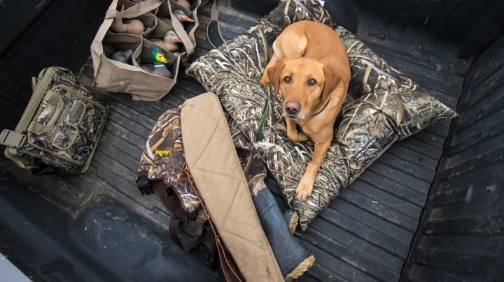 5 Tips to Help Travel with Hunting Dogs Preview Image