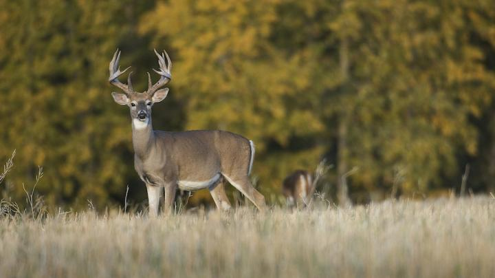 5 Whitetail Tactics You Won't Believe Preview Image