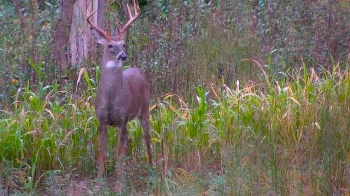 Deer Hunting QOW: What If a Local Buck Won't Come by My Stand? Preview Image