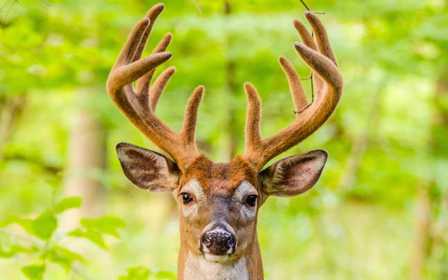 7 Ways to Outsmart Big Deer While Scouting Preview Image