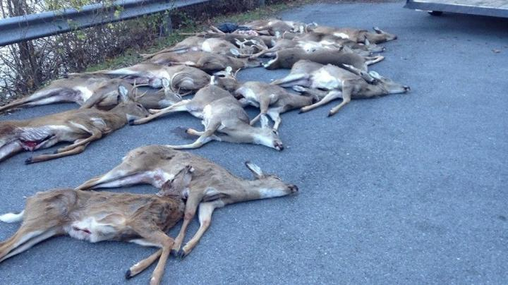 18 Deer Unlawfully Killed By Poachers Preview Image