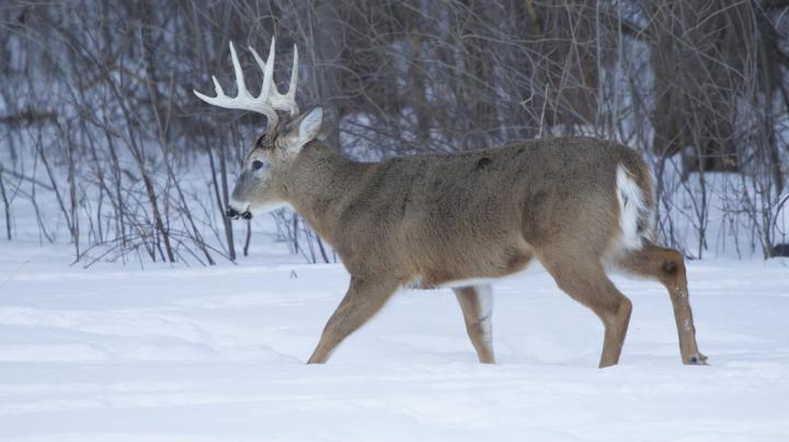 5 Tips For Hunting In Cold Weather Preview Image