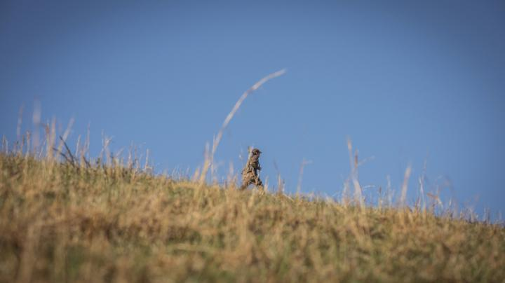 How to Hunt Open Country Turkeys Preview Image
