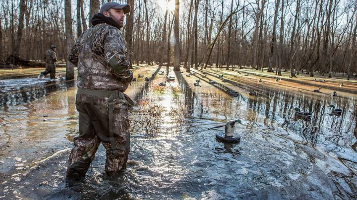 Winter Finally Coming to the Southern Mississippi Flyway? Preview Image