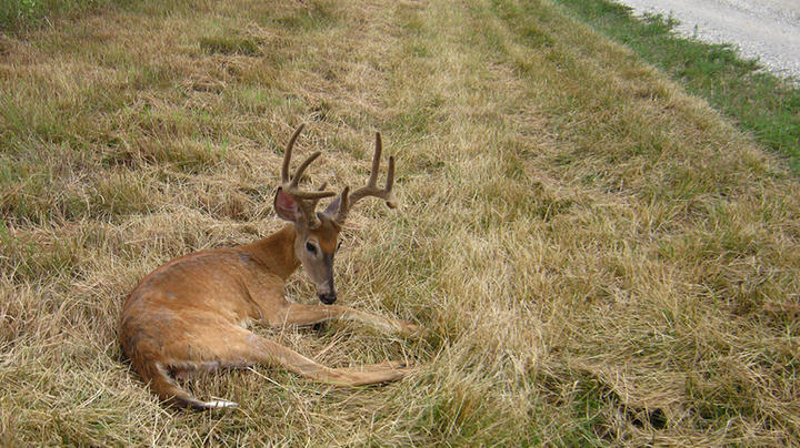 The Top 7 Threats to Deer Hunting Preview Image