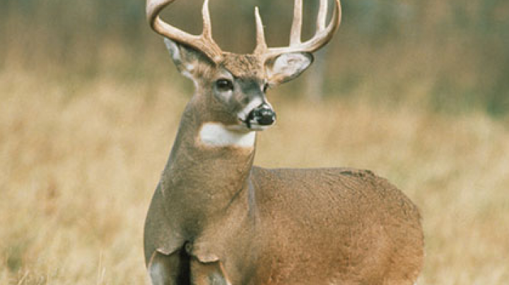 Authorities Follow (Deer) Noses to Record Fine Preview Image