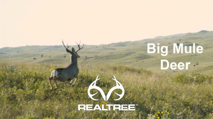The Chronicles: Hunting Mule Deer in Nebraska  Preview Image