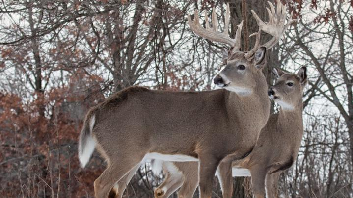 How to Track a Buck in the Snow Preview Image