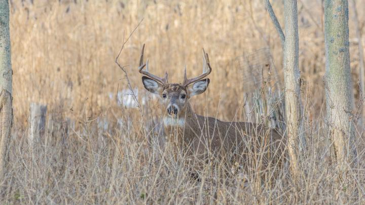 3 (More) Things Every Deer Hunter Should Do Right Now Preview Image