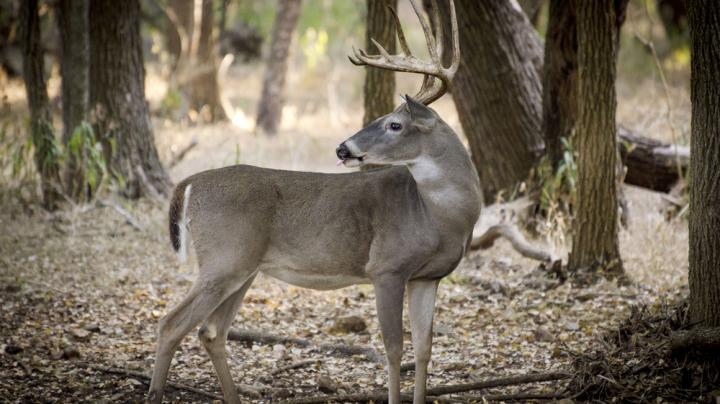 5 Tips for Killing a Rutting Buck in the South Preview Image