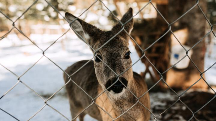State Supreme Court Hits Captive Cervid Hunting Industry Hard Preview Image
