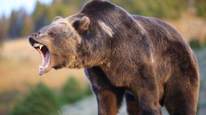 How to Plan a Grizzly Bear Hunt Preview Image