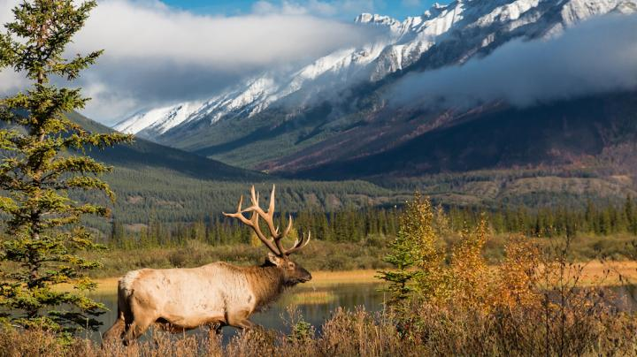 7 Elk Hunting Tips from Real-Life Elk Hunters Preview Image