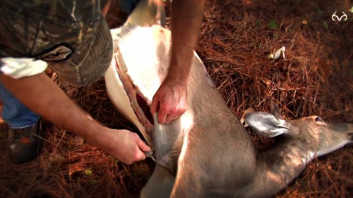 4-Step Deer Butchering: The Path to Amazing Venison Preview Image