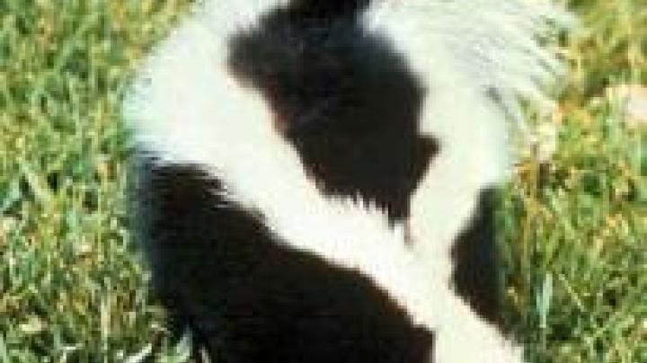 Man Shoots Cousin Mistaking Her for Skunk Preview Image