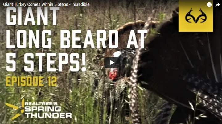 Realtree's Spring Thunder: Giant Longbeard at 5 Steps Preview Image