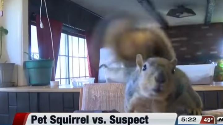 Pet Squirrel Attacks Home Intruder Preview Image