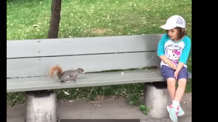 Watch Squirrel Pull Out Girl's Tooth Preview Image