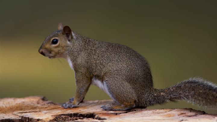 A New Way to Skin a Squirrel Preview Image