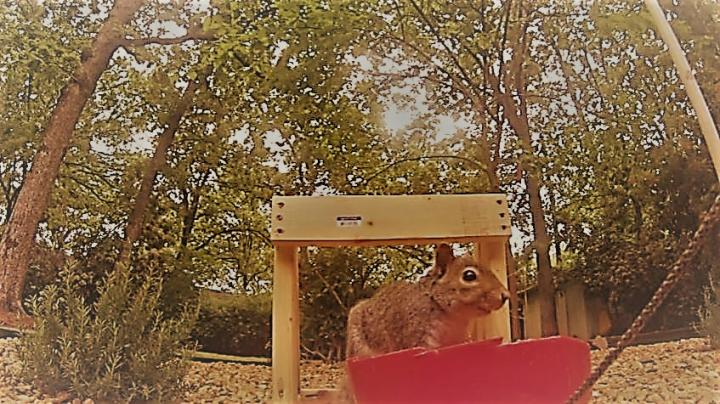 Video: Squirrel Launched from Catapault Below Bird Feeder Preview Image