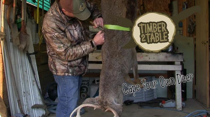 Timber To Table: How To Cape Your Deer Preview Image