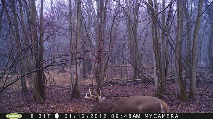 A Trail Camera Forgotten Preview Image