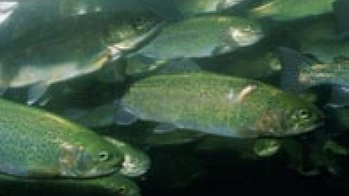 100K Rainbow Trout Run in AZ Preview Image