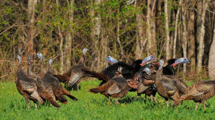 Turkey Hunting in Nebraska Preview Image