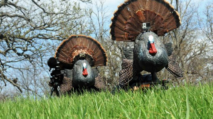 All About Turkey Reaping Preview Image