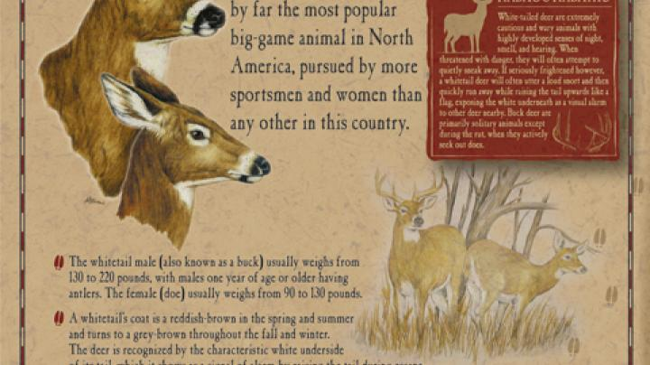 Whitetails Unlimited program gets huge boost from Midway USA Preview Image