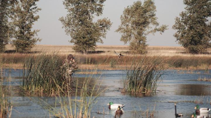 The X: Public Land Duck Hunting in Minnesota Preview Image