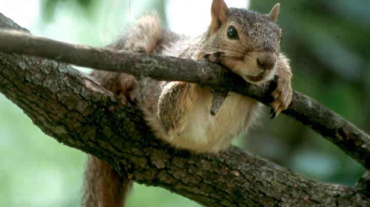 Squirrel Hunting Myths and Facts Preview Image
