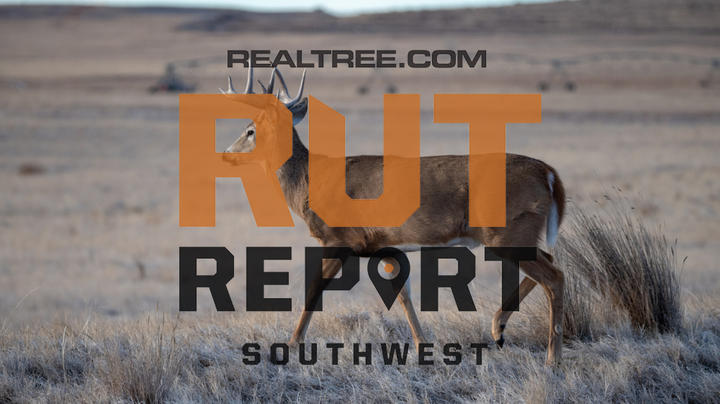 Southwest Rut Report: Solid Rut Action in the Far Southwest