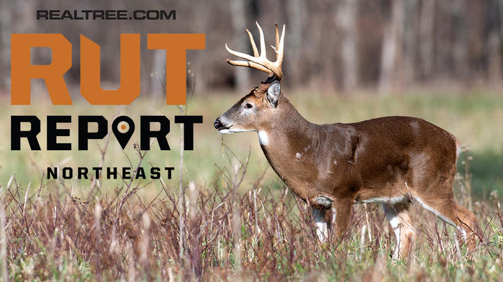 Rut Report Image: Tony Campbell / Shutterstock