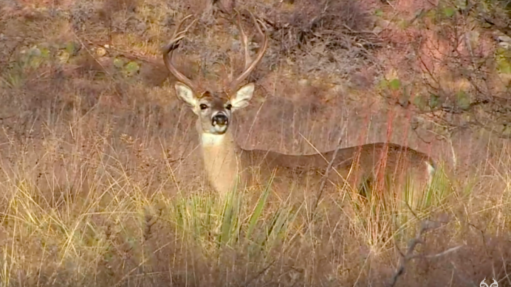 Deer Hunting in Texas Preview Image