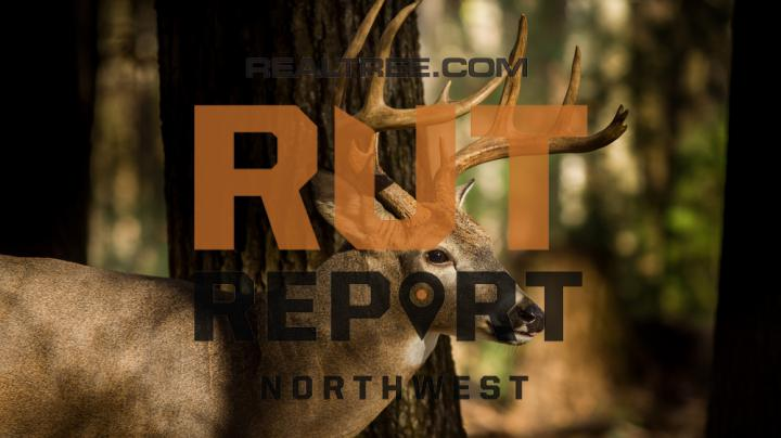 Realtree Rut Report: Things Are Beginning to Pick Up
