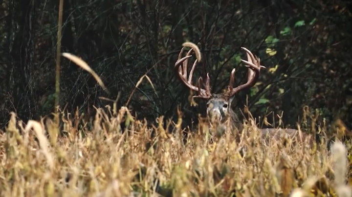 Man catches big fish bare handed realtree for Realtree game and fish forecast