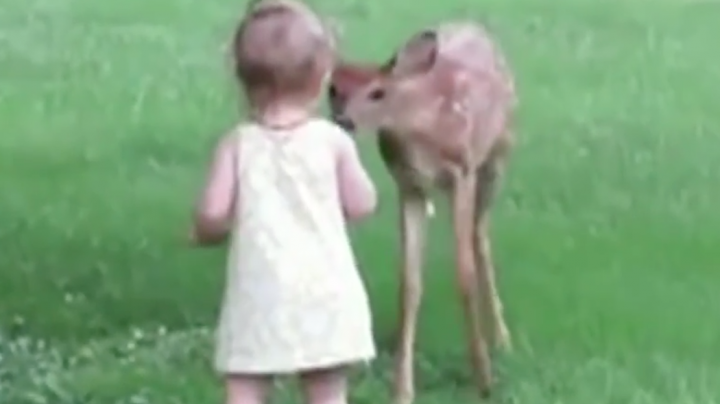 Little Girl Pets Fawn Preview Image
