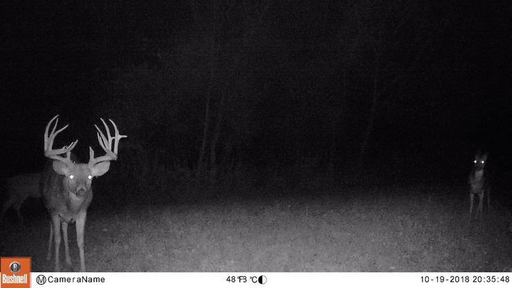 An October 19 trail cam photo shows the buck checking a scrape in the dark. Several days later, the buck was caught checking the scrape again during daylight. Eiring arrowed the buck a week later. (Photo courtesy of Schuhter's Outpost)