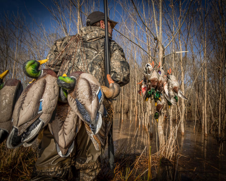 Don't just throw and go this season. Configure decoys so you attract birds and bring them sure-kill close. Photo © Austin Ross