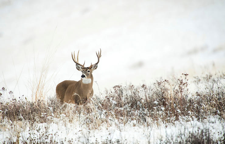 Are south-facing slopes just a bunch of popular talk? Or do deer really live there? (John Hafner photo)