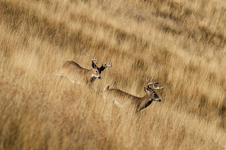 Try your hand at a prairie hunt this season. (John Hafner photo)