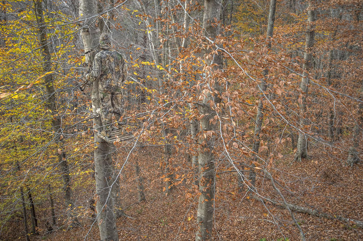 Be in a tree November 3-11. It's the best week of the rut. (Bill Konway photo)