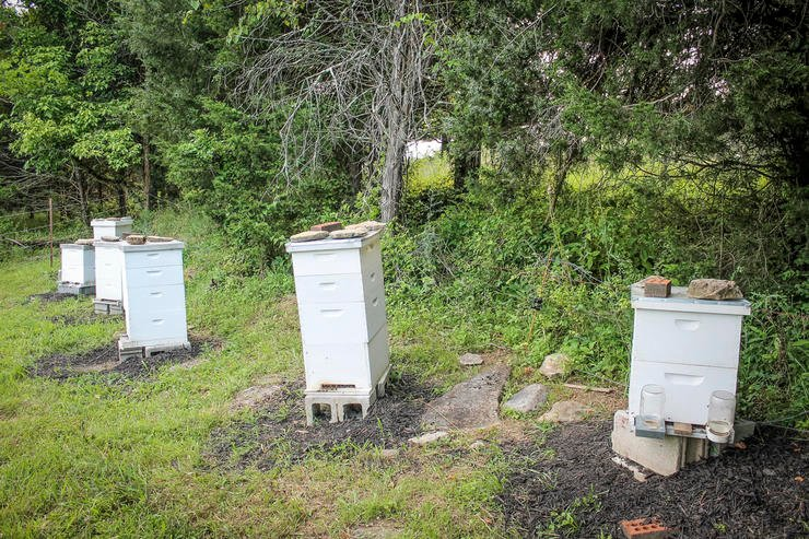 Place your hive boxes in sunny areas, with the opening facing to the South. (Cheryl Pendley photo)