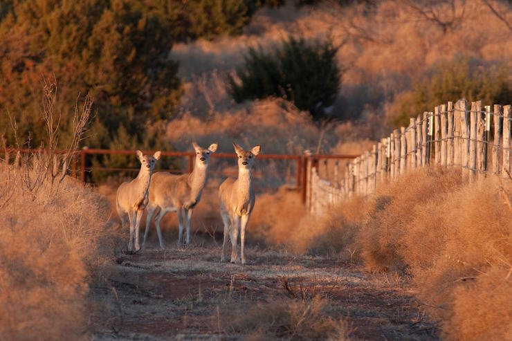 Deer aren't numb to hunting pressure. They'll react to it and change their patterns. (Russell Graves photo)