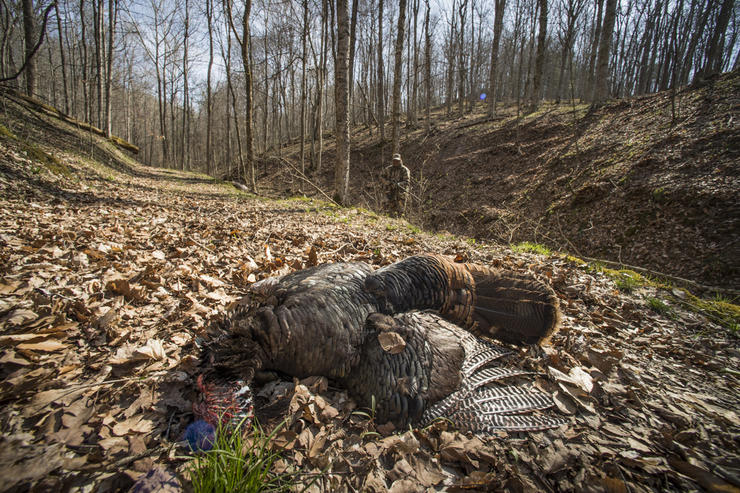 Killing a turkey is tough enough. These 10 things can make it even harder. (© Bill Konway photo)