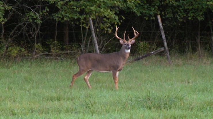 A stud 7-pointer shows himself during daylight hours. (Doug Hampton photo)